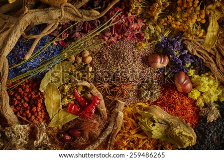 spices and herbs on white background. top view  - stock photo