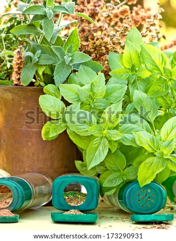 Spices - fresh and dried spices (herbs) - stock photo