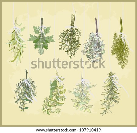 Spicy herbs. Collection of fresh herbs. Illustration spicy herbs. - stock photo