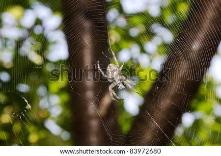 spider and spiderweb against foliage - stock photo