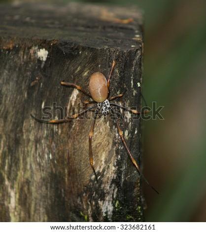 Spider, Australia - stock photo