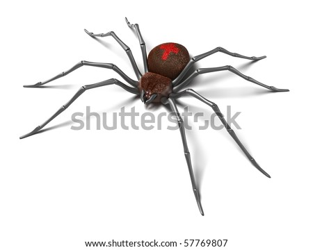 Spider : Black Widow. Isolated on white surface. 3D render. - stock photo