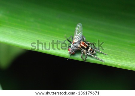 Spider caught fly for eat on leaf in nature
