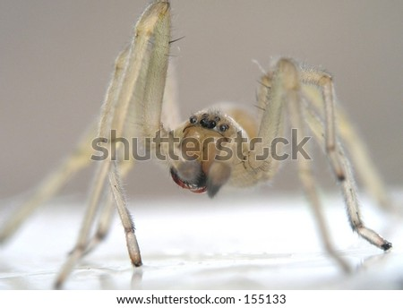 Spider - Come here my little cutie - stock photo