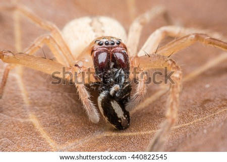 Spider eating its victim - stock photo