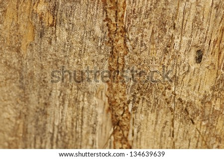 spider has a similar color with the tree bark, that is call camouflage - stock photo