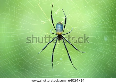 Spider in its web - stock photo
