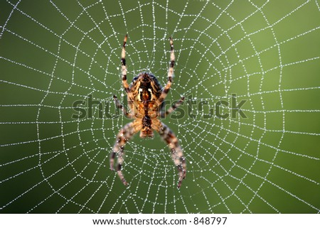 Spider in the middle of a web - stock photo