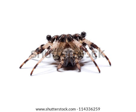 spider on a white background