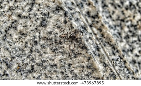 Spider on marble