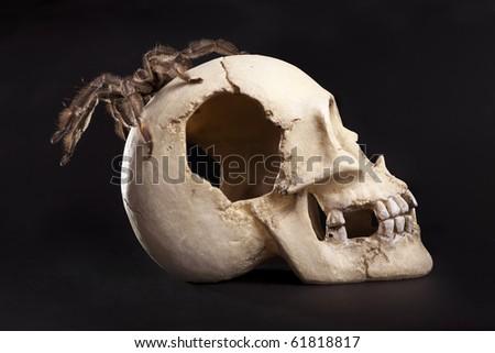 spider on the skull - stock photo