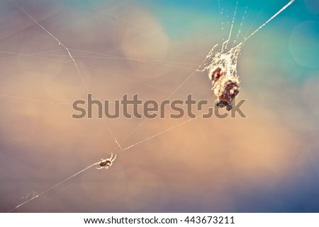 spider on the web and the victim - stock photo