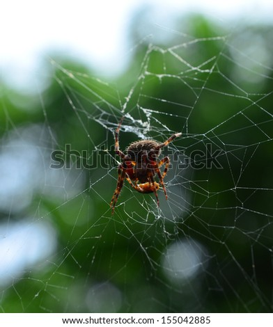Spider on the web over green background - stock photo