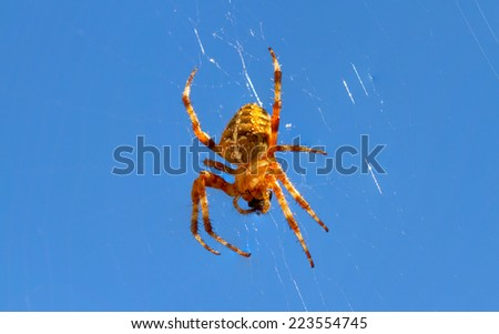 Spider on web with blue sky background - stock photo