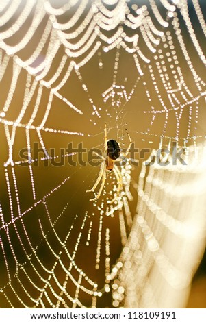 spider on web with water drops - stock photo
