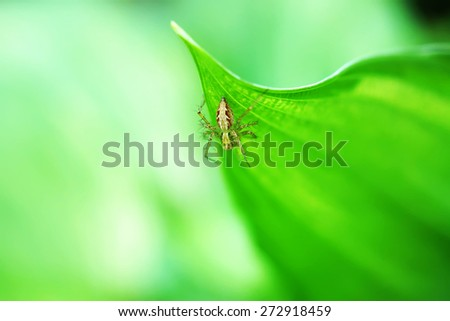 Spider perched on a green leaf