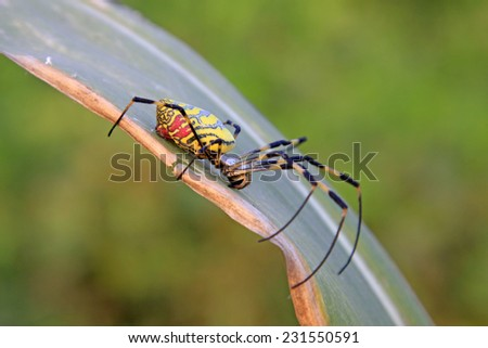 spider perches on plant leaves