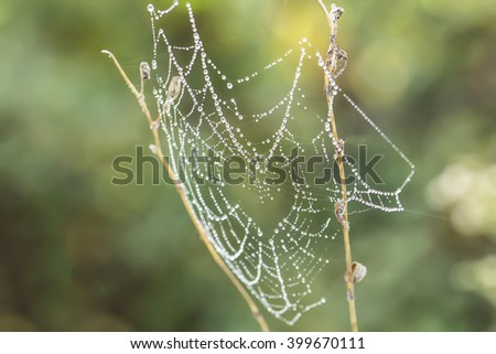 Spider's cobweb in nature with heart shape - stock photo