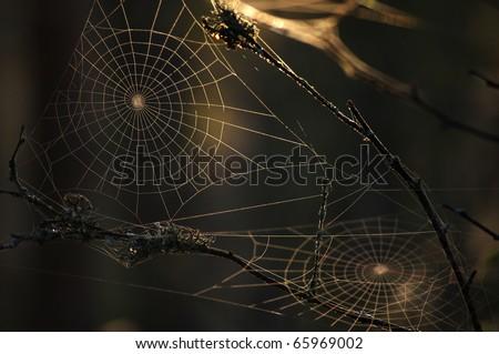 spider's web in dark background - stock photo