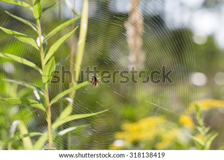 Spider sits in the center spider web and waits for prey. Spider web weighs on grass in the wild. - stock photo