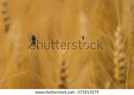 Spider, spider with fly - stock photo