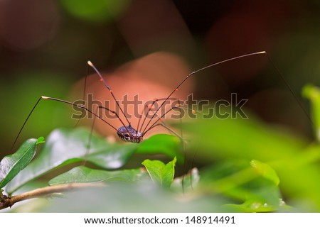 Spider tropical zone and rainforest asia thailand - stock photo