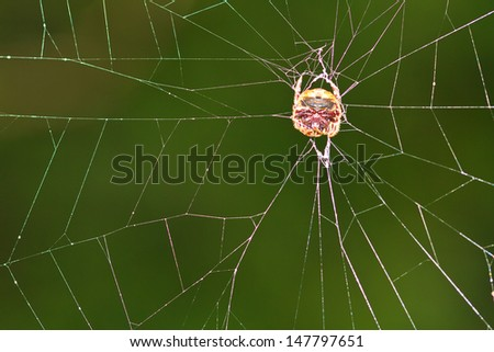 Spider tropical zone Pang Sida National Park thailand