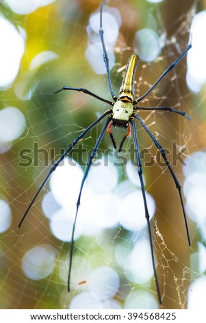 Spider waiting for prey on spider webs. - stock photo