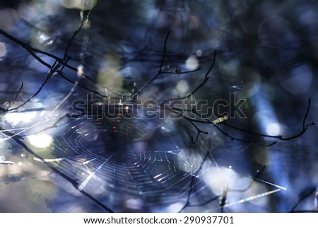 Spider web and branches in an abstract blur with shadow and light. - stock photo