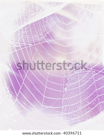 Spider web backgrounds on violet - stock photo