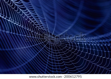 Spider Web close up in the dark - stock photo