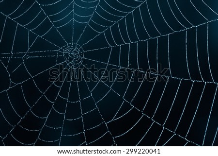 spider web close up in the darkness - stock photo