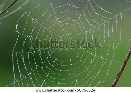 Spider web early in the morning - stock photo