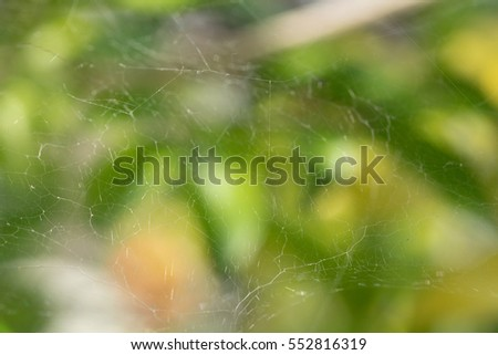 Spider web in a day