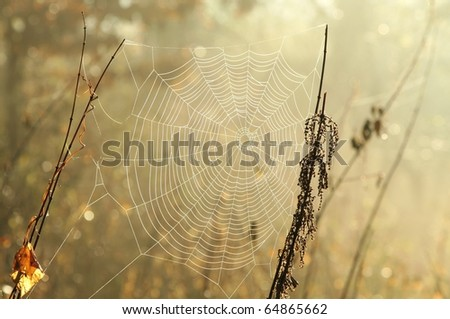 Spider web in a meadow on a foggy morning. Photo taken in November. - stock photo