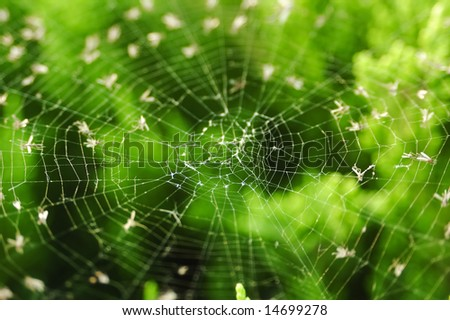 Spider web in green background