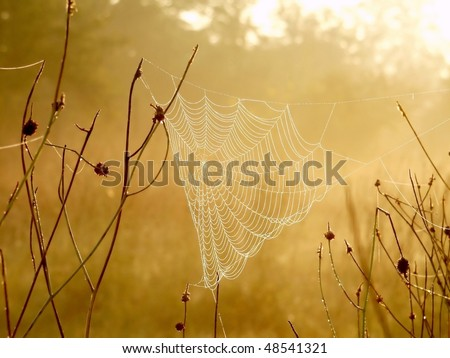 Spider web on a meadow in the rays of the rising sun. - stock photo