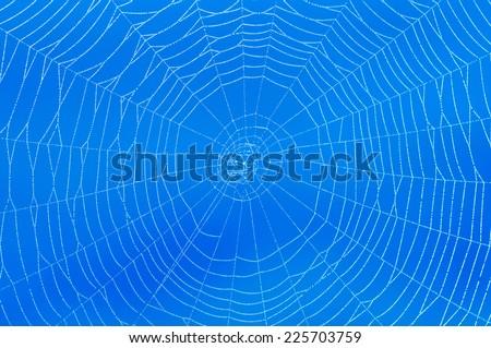 Spider web on blue background. - stock photo