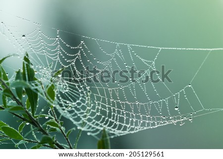 spider web or cobweb with water drops after rain against green background - stock photo