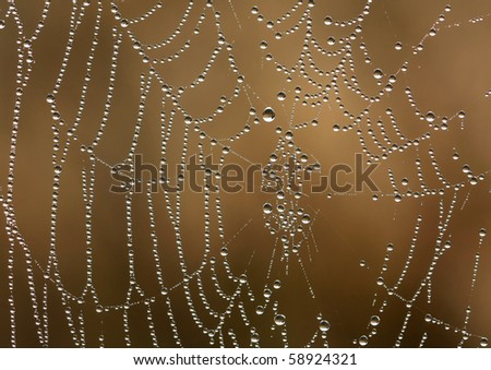 Spider web with drops of morning dew - stock photo