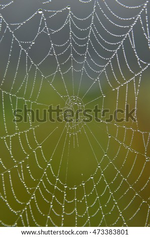 Spider web with drops of water