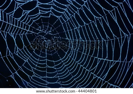 spider web with glistening dewdrops - stock photo