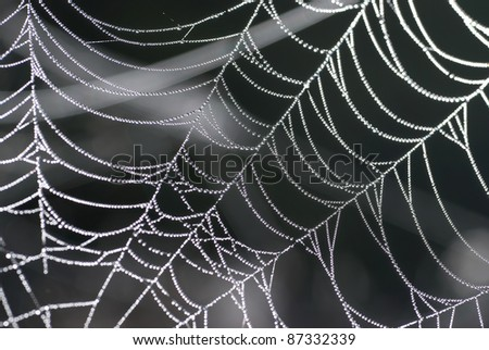Spider web with shiny drops of water