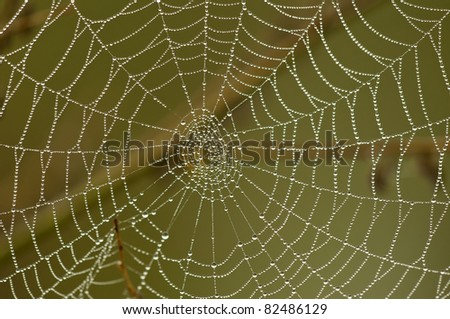 Spider web with water droplets - stock photo