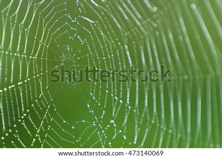 Spider web with water drops. Cobweb with dew.