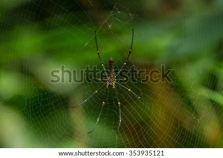 Spider webs in the nature. - stock photo