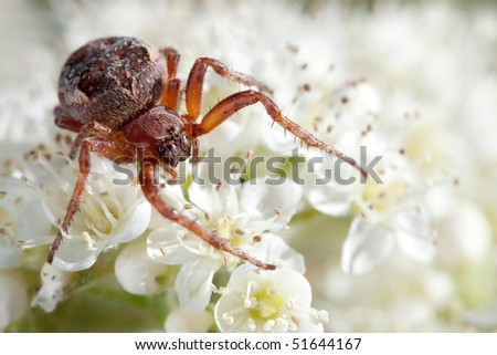Spider wedding photo session on a white bouquet - stock photo