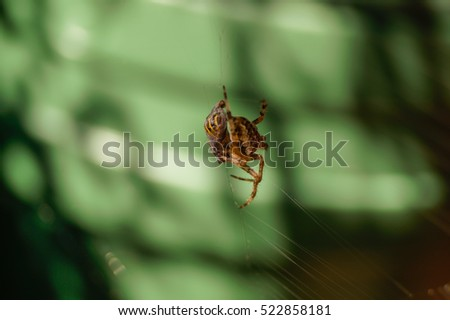 Spider with victim in net