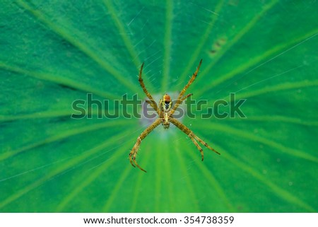 Spiders, insects, nature, macro insects. - stock photo