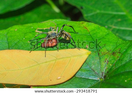 Spiders - spiders eat worms - stock photo